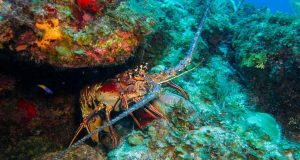 Under-reporting of catches threatens Caribbean marine life