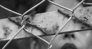 LIVE! US woman gangrape: Police arrest four accused